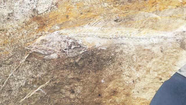 Mostar: Krije li Velež bogate paleontološke nalaze