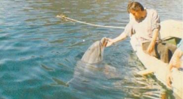 Tko se sjeća Joce, najpopularnijeg delfina 80-tih godina?