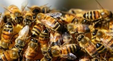 EU zabranila još jedan pesticid, opasan je za ljude i pčele