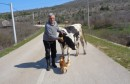 Čapljina: Na selu živjeti, a bez krave biti to je k'o ne imati majku