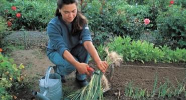 Hladno vrijeme i obilne kiše odgodili sjetvu i sadnju. Voće i povrće skuplje do 50 posto