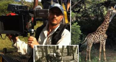 Južnoafričkog snimatelja usmrtila žirafa