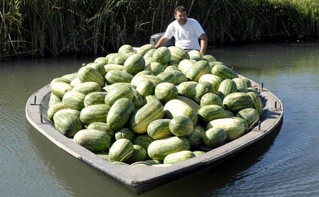 Dolinu Neretve pogodila je poljoprivredna kataklizma, niti jedan proizvod ne može se prodati!