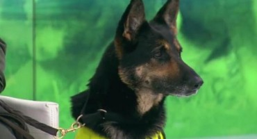 Narkokartel za glavu ovog psa nudi 59.000 eura