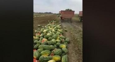 Bacio 25 tona lubenica jer ih nema kome prodati