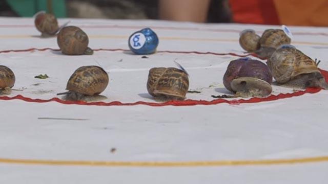 U Velikoj Britaniji održano svjetsko natjecanje za najbržeg puža