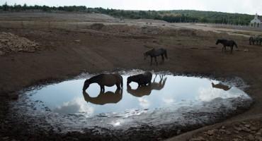 Konjima na Bilima nestaje vode, objavljen poziv za pomoć
