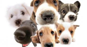 Najčešći mitovi o psima