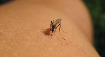 Ovih sedam mirisa momentalno će otjerati komarce