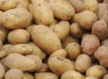 Nestašica krumpira svuda u Europi, a podbacio i češnjak