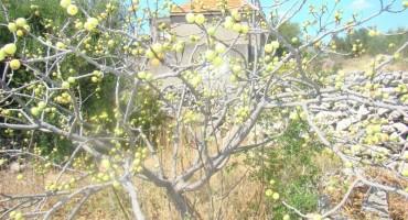 Prodaje se građevinsko zemljište u Trogiru