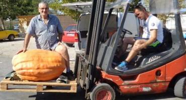Na Veletržnici u Čapljini tikve teške preko 135 kilograma