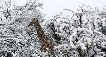 U Južnoj Africi pao snijeg, pogledajte snimke