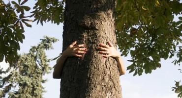 Znate li zašto mnogi kucaju u drvo za sreću?