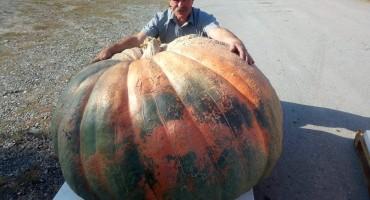 Najveća bundeva u Hrvatskoj teži 420 kilograma
