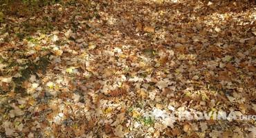 Boje Hercegovine: Jesen u mom sokaku