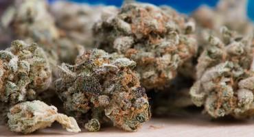 U akciji Tužiteljstva BiH i SIPA-e zaplijenjeno oko 400 kg marihuane