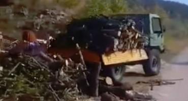 Snimka iskrcavanja drva iz Dalmacije postala hit: Aj ti brže istovari