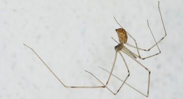 Postoje jako dobri razlozi zbog kojih se ne bi trebali rješavati pauka iz vašeg doma