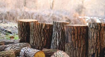 Čavara će razmotriti pomilovanje Fikreta Dedića koji je u zatvoru zbog sječe 10 metara državnih drva