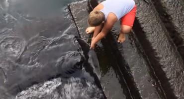Šokantno: Dječak se igrao s opasnim morskim stvorenjem