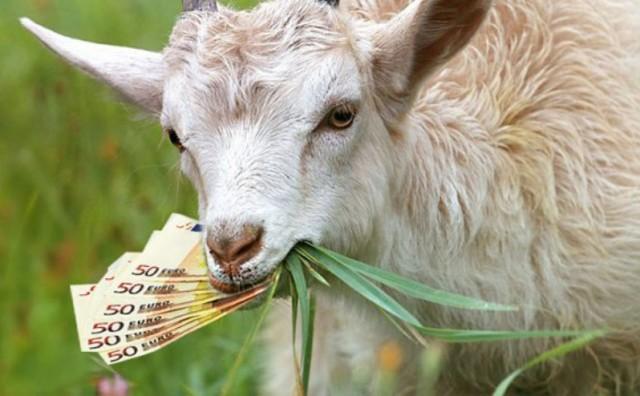 Vjerovali ili ne: Koza pojela 20.000 eura, vlasnik otada samo sjedi i šuti