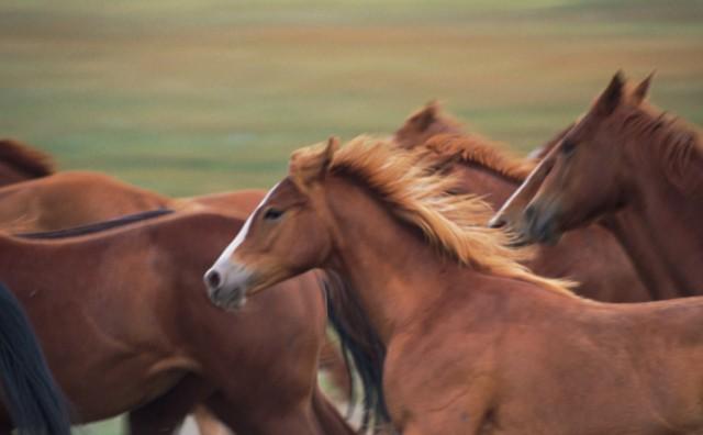 Strava kod Livna: Kraj ceste pronađen ubijeni divlji konj, netko mu odsjekao noge i ostavio ga tamo