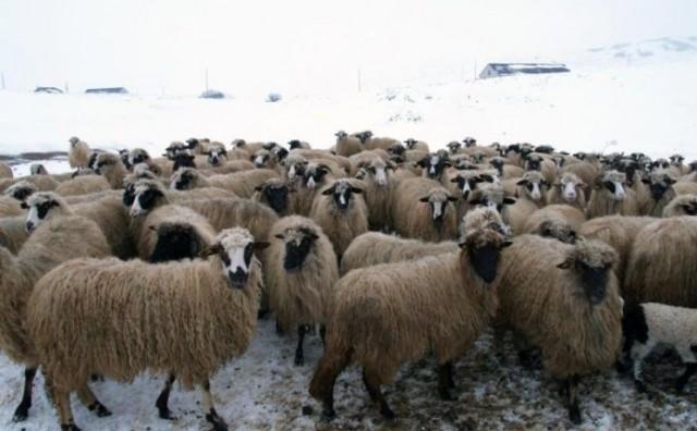 Zahvala direktora Farme Smiljanić ramskom načelniku i djelatnicima zimske službe