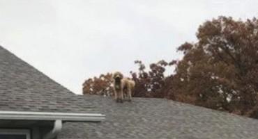 Vlasnica napokon doznala kako njen pas prelazi ogradu i iznenadila se