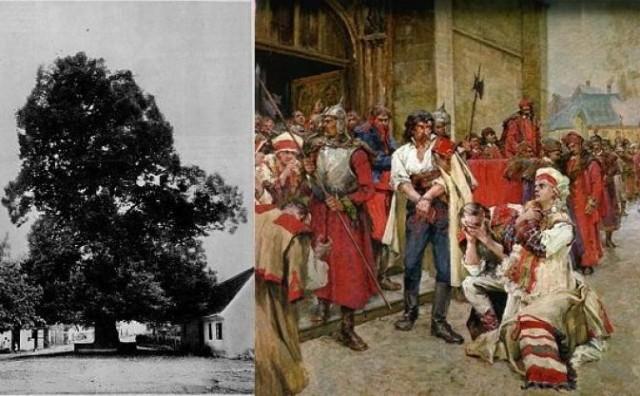 Znamenita Gupčeva lipa u Gornjoj Stubici nominirana je za europsko stablo godine