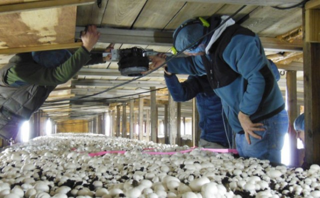 Gljivari već pet godina nisu dobili ni marku iz budžeta