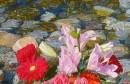 Marin Topić: U Neretvi cvijeće