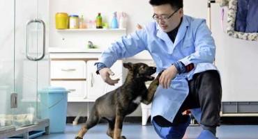 Kina klonira policijske pse