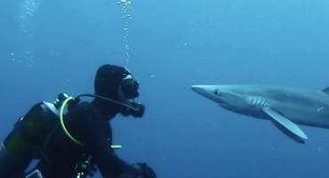 Susreo se oči u oči s morskim psom, pa se dogodilo nešto fascinantno