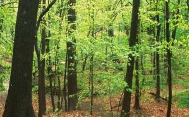 Studenti će morati posaditi 10 stabala da bi dobili diplomu