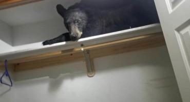 Medvjed upao u kuću, zaključao vrata, pa ušao u ormar da prilegne
