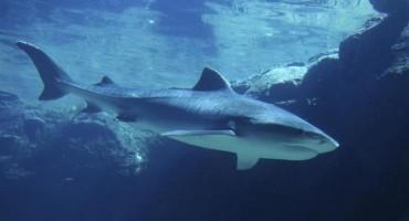 Objavljena je nova snimka velike morske nemani pokraj Makarske