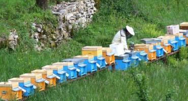Kongres - Standardizacija kvalitete meda i apiterapija, šanse za bh. pčelarstvo
