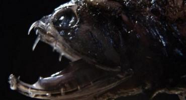 Pročitajte tko je najmanji, a najkrvoločniji morski predator