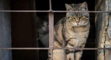 Preko mačke pokušali unijeti mobitel u zatvor