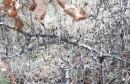 – Deminerska osobina: Odvažnost za najopasniji posao na svijetu