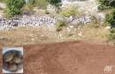 Lopovi mu na Bilima iskopali i odnijeli 500 kilograma krumpira, njemu ostavili svega jednu kantu