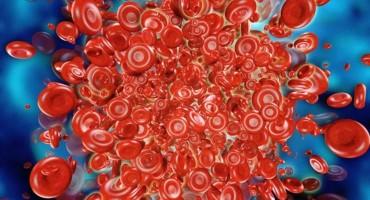 Zlatna krvna grupa - ima je samo 43 ljudi na svijetu!