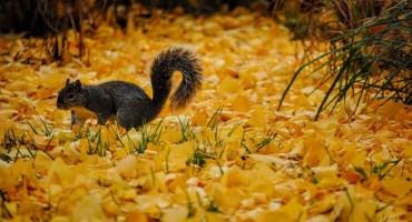 Stigla je jesen!