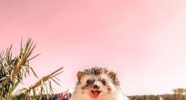 Najsretniji jež na svijetu putuje po cijelom svijetu sa smješkom