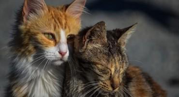 Mačke spasile svoje vlasnike: Upozorile ih na urušavanje kuće