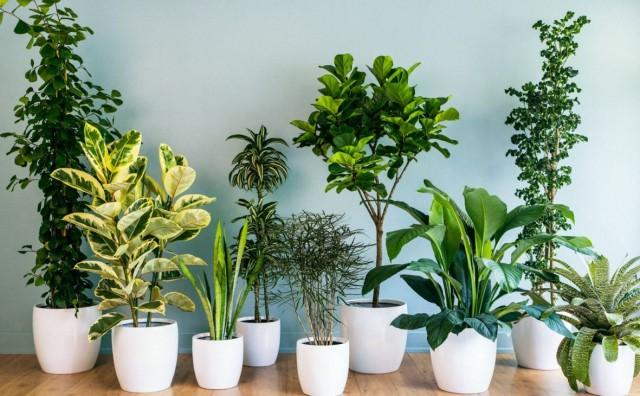 Četiri razloga zašto je dobro uzgajati kućne biljke
