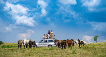 Prkose zvijerima i krivolovcima: Posljednje veliko krdo divljih konja u Europi