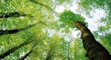 Fond za zaštitu okoliša dodijelio sredstva: Večernjaku 30.000, FEAL-u 90.000 KM za sortiranje i prešanje otpada