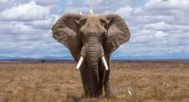 UBILI ZAŠTIĆENOG SLONA Vlada profesionalnim lovcima ukinula dozvole za lov